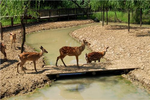 茱萸湾公园 第二张 原网页中第二张保留 合计3张图_副本.jpg